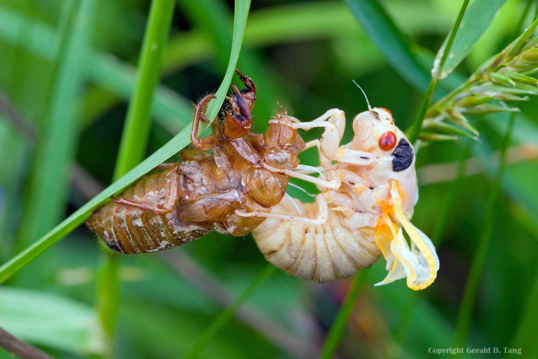 17 Year Cicada Hatch
