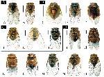 Cicada Types