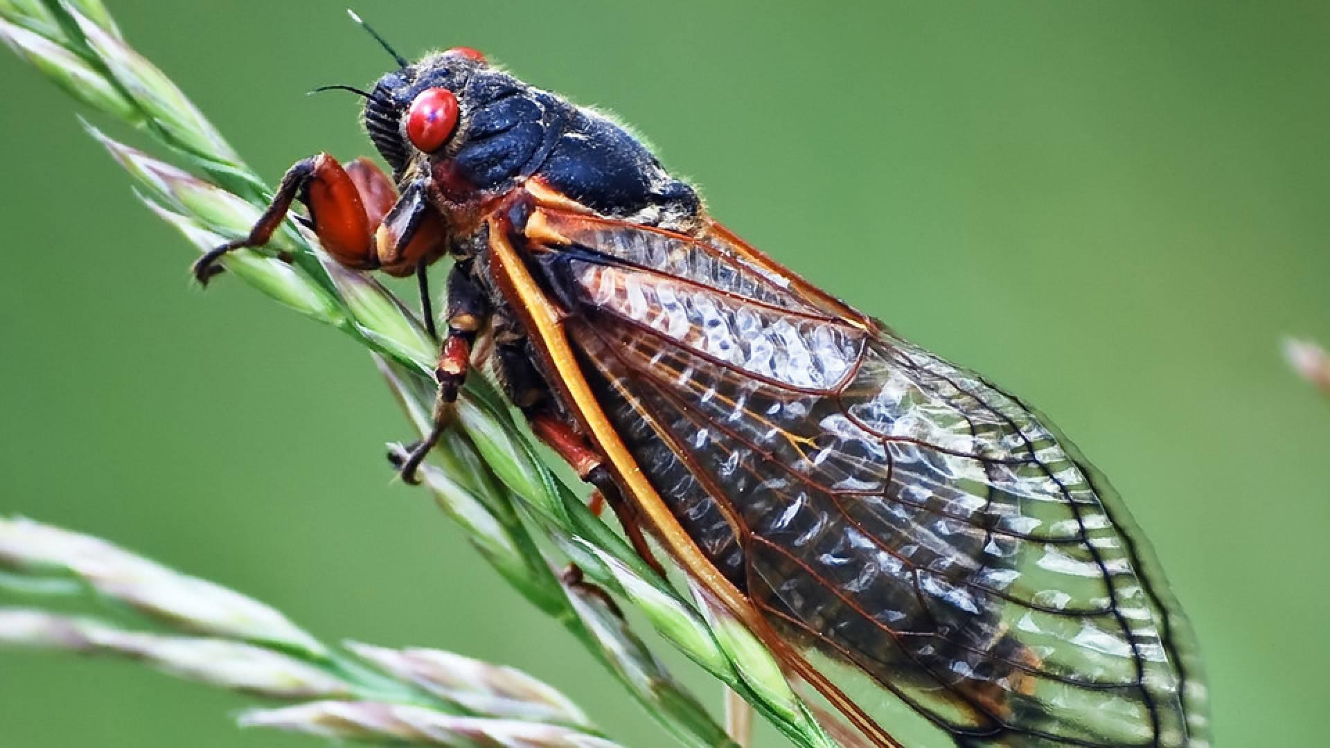 Cicada Pictures