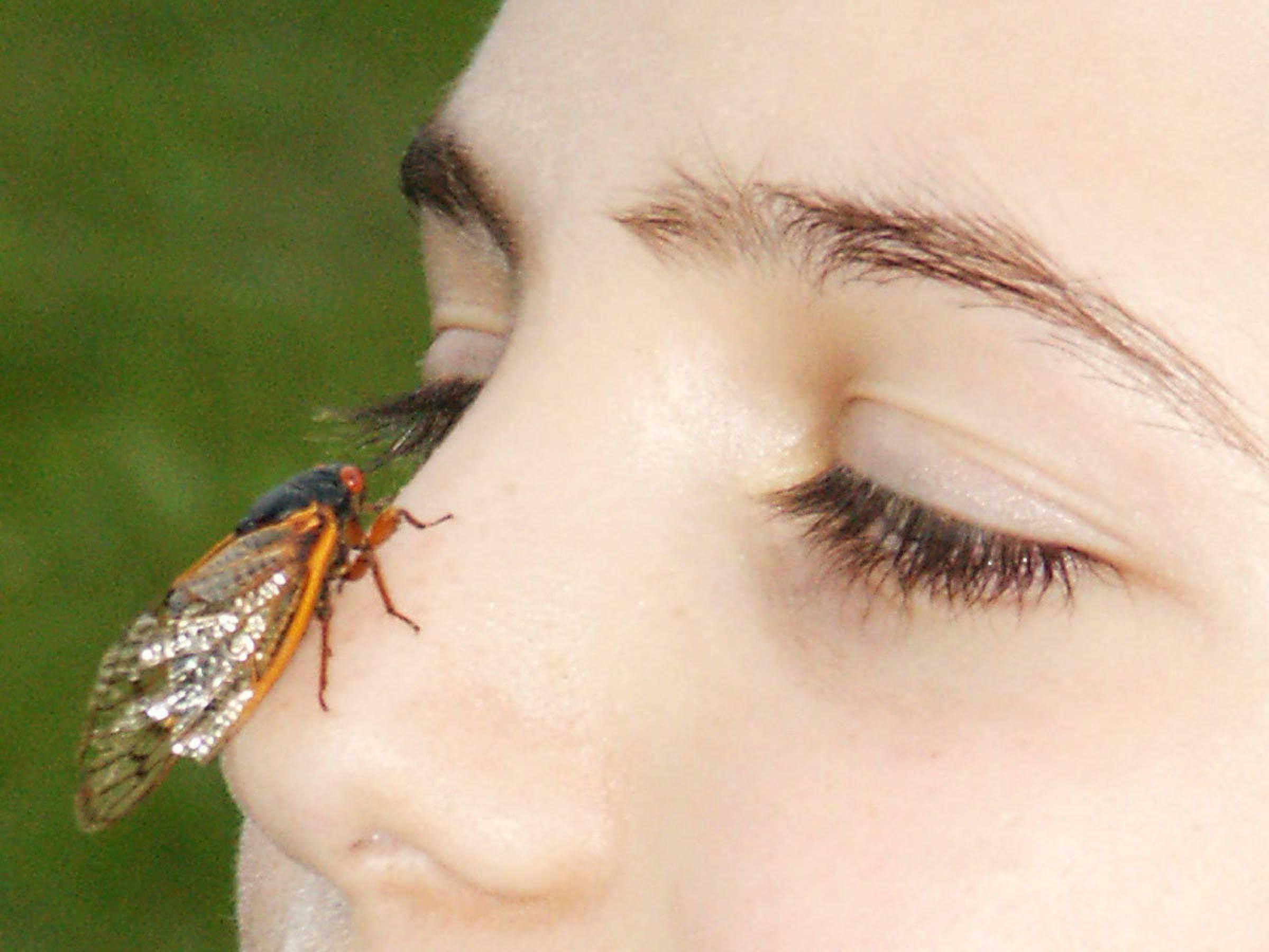 Picture Of Cicada