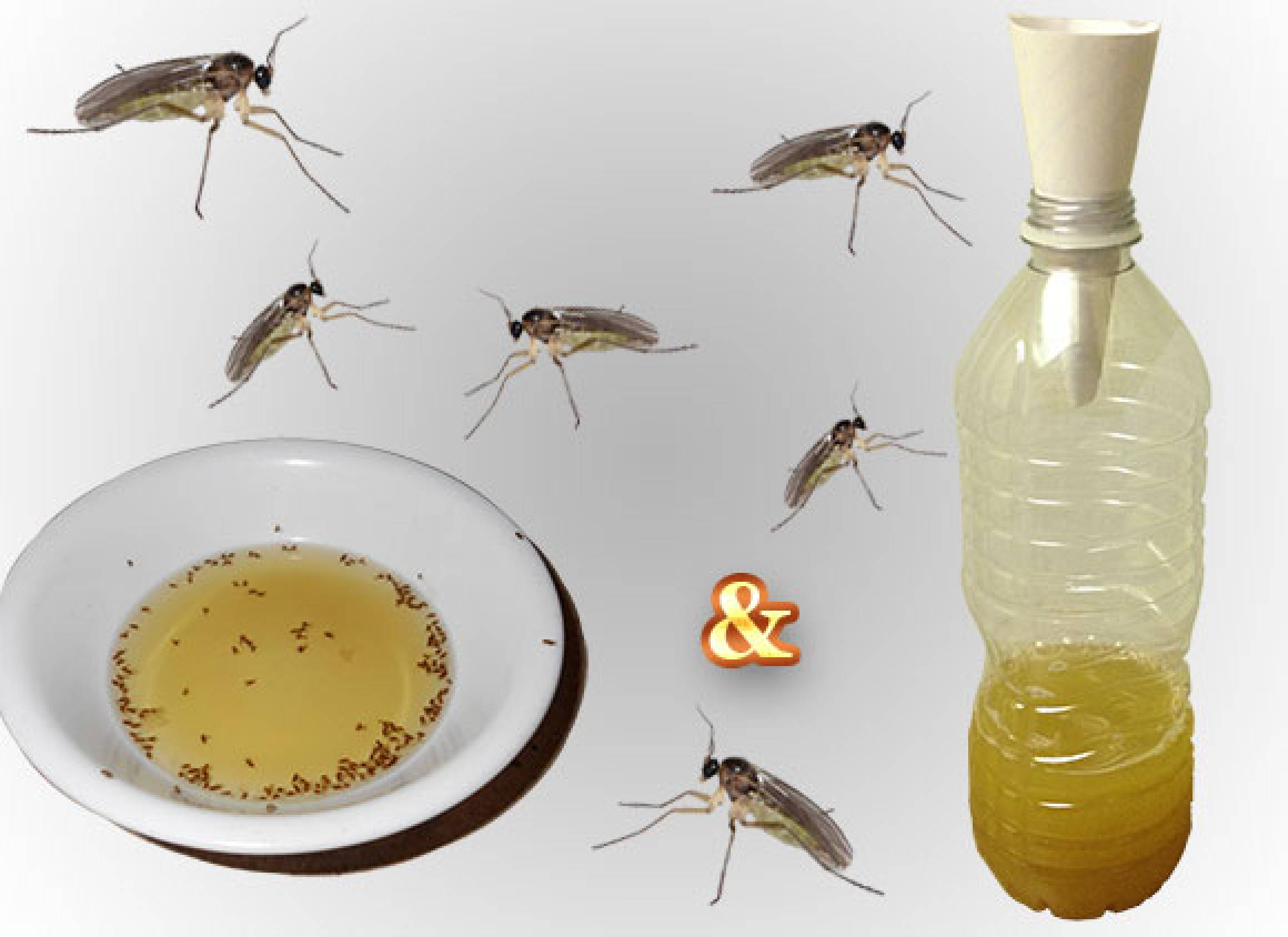 A Gnat Trap As No.1 Approach to the Problem