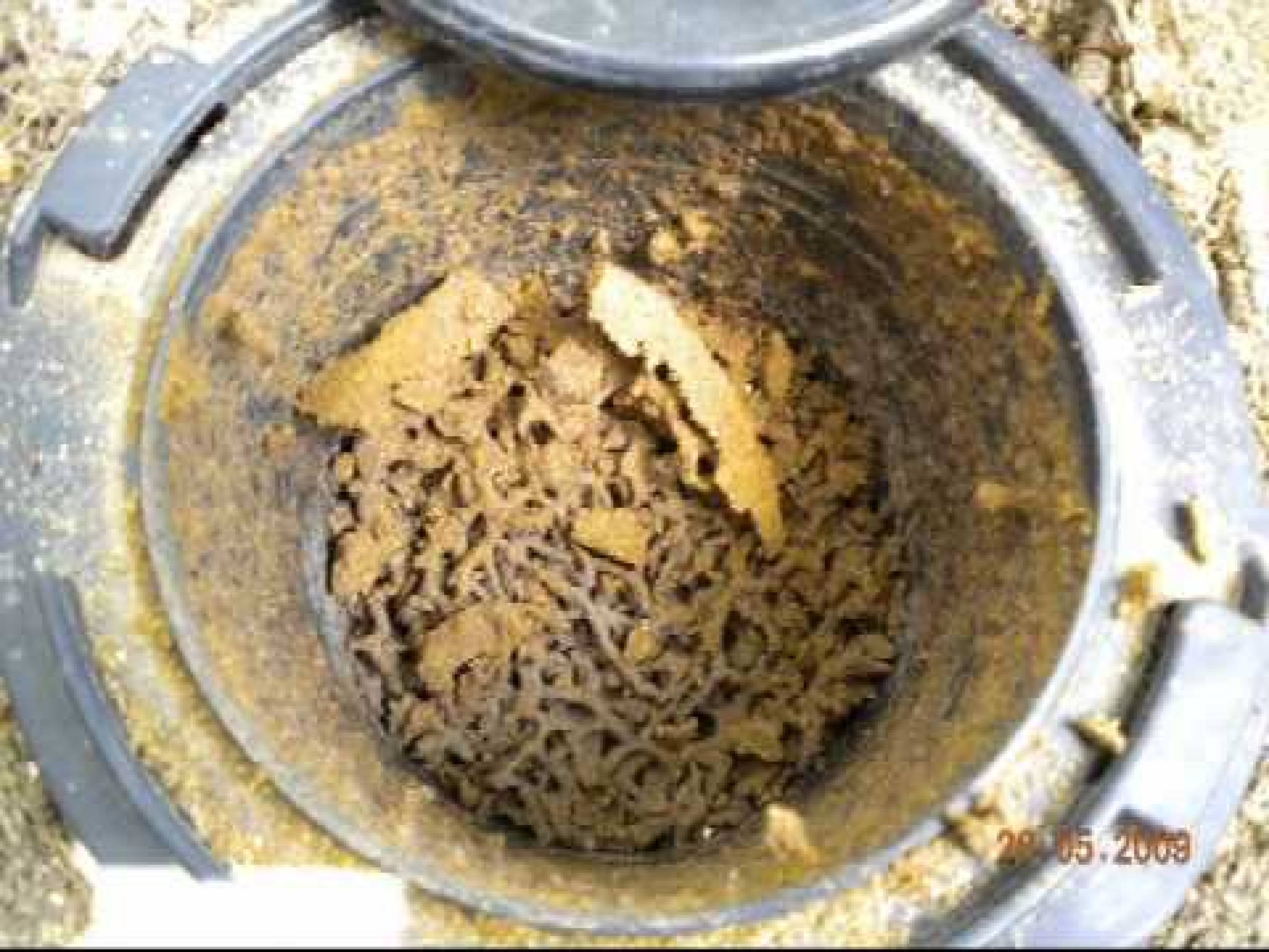 Get Rid Of Ground Termites