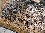 Get Rid Of Swarming Termites