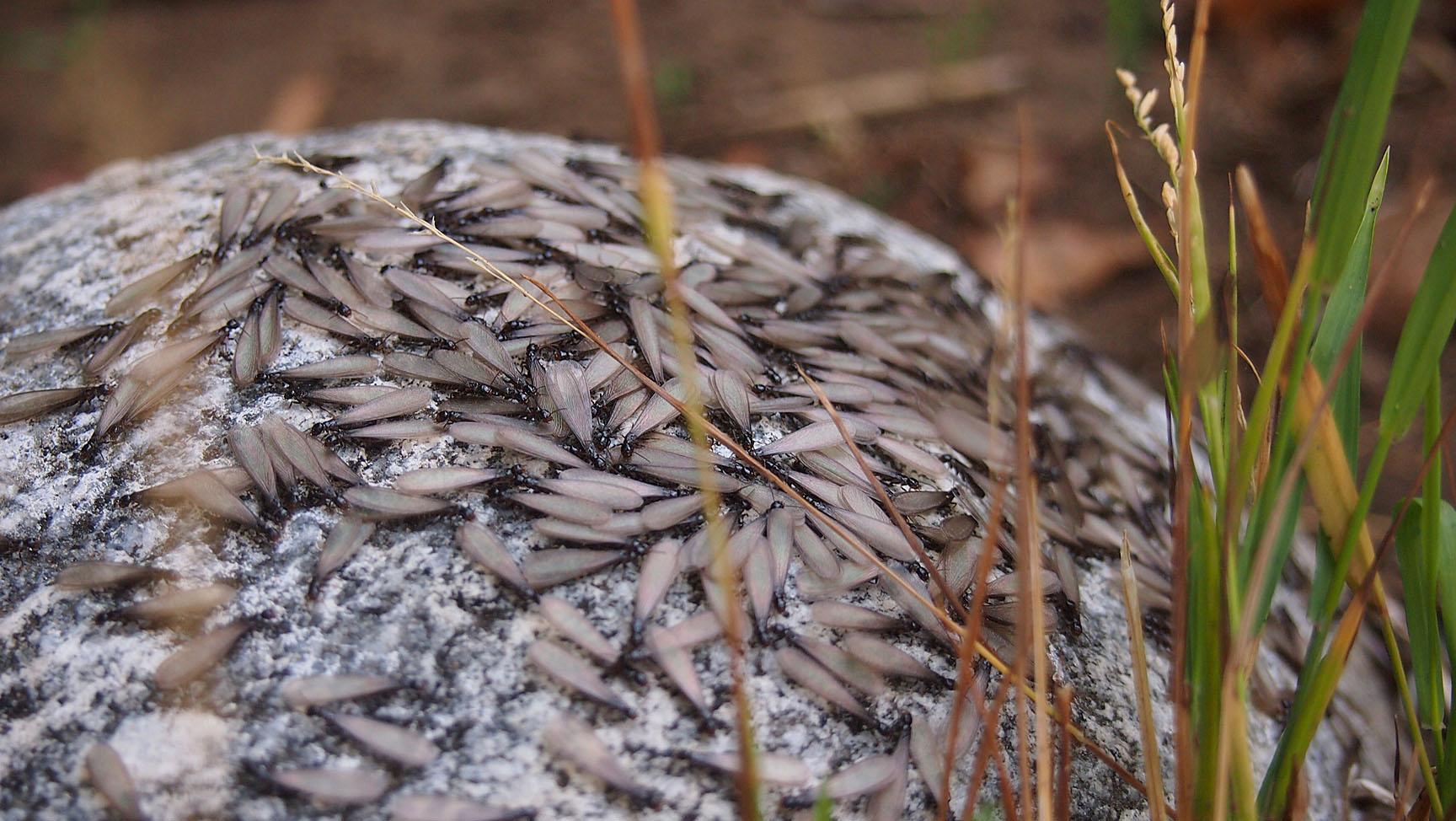 Get Rid Of Termites In Garden