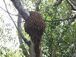 Get Rid Of Termites In Tree