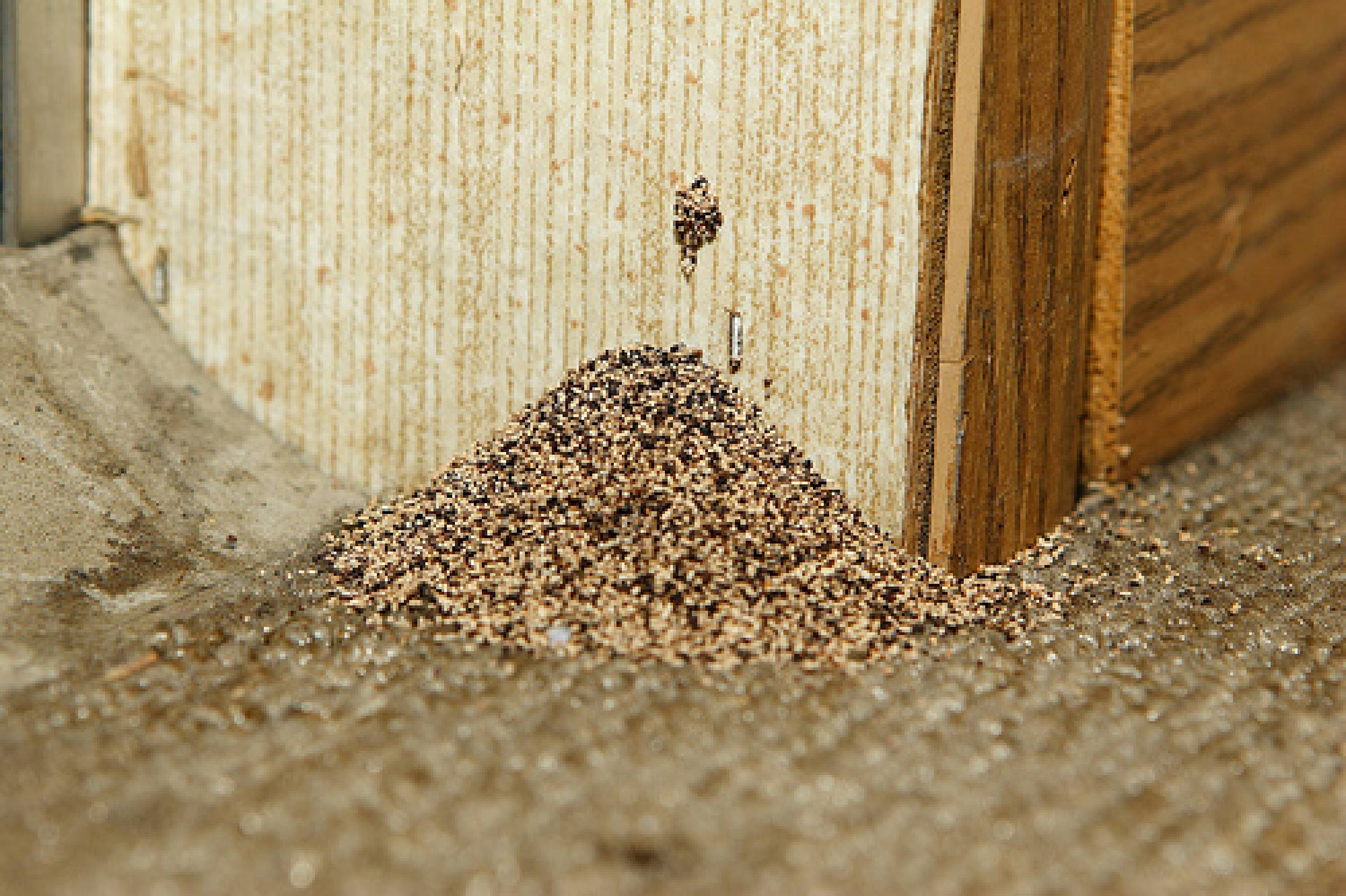 Get Rid Of Wood Termites