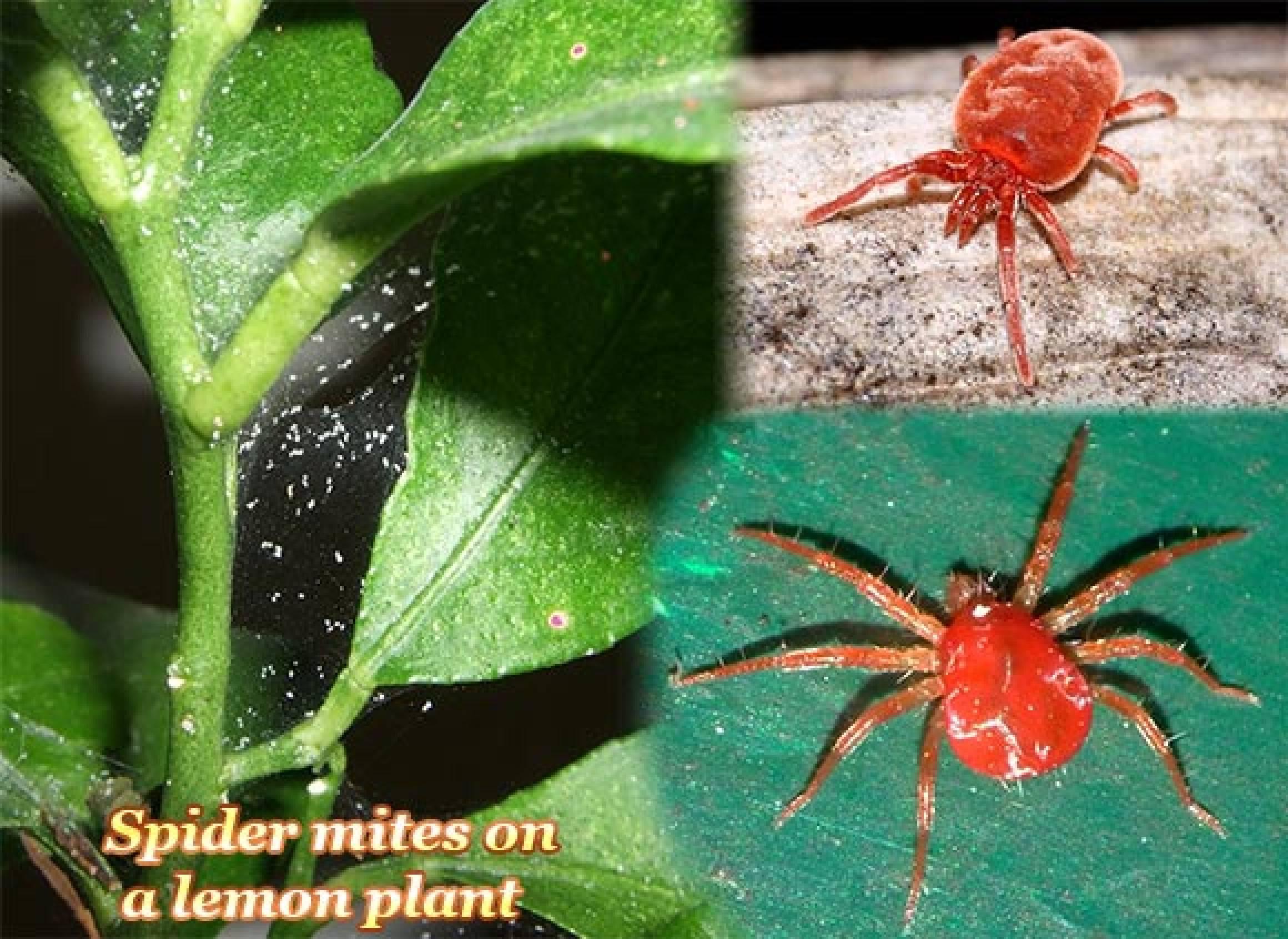 Termites It Takes Two To Make Love