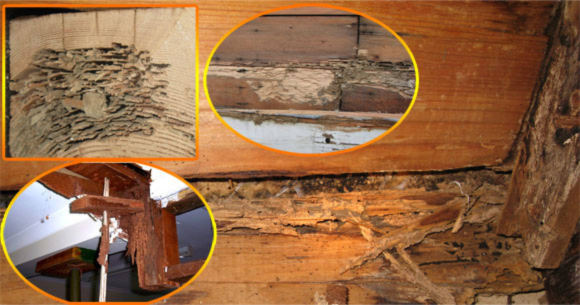 termite damage pictures