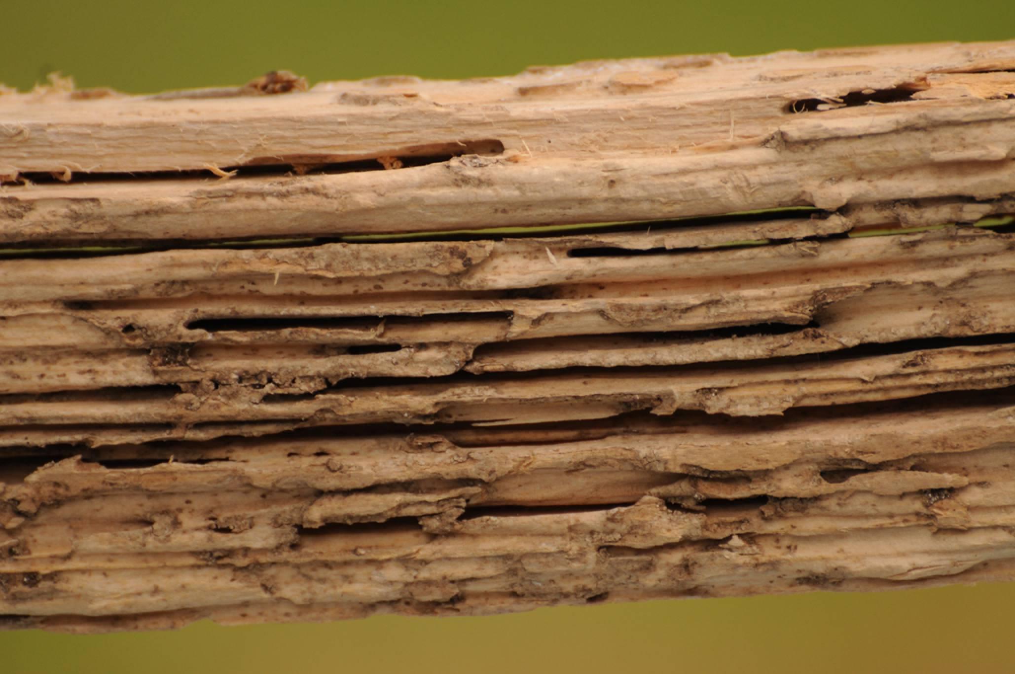 identifying termite damage