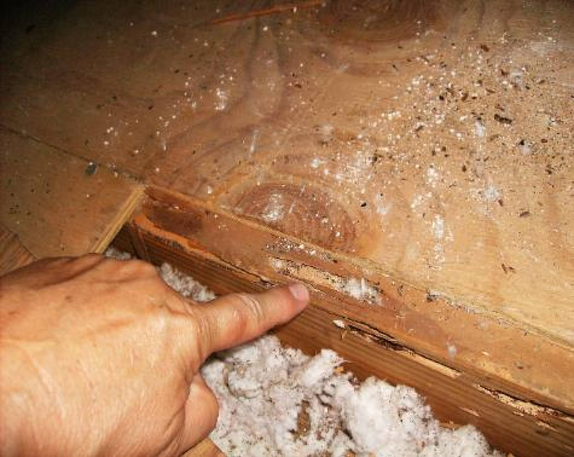 repair termite damage