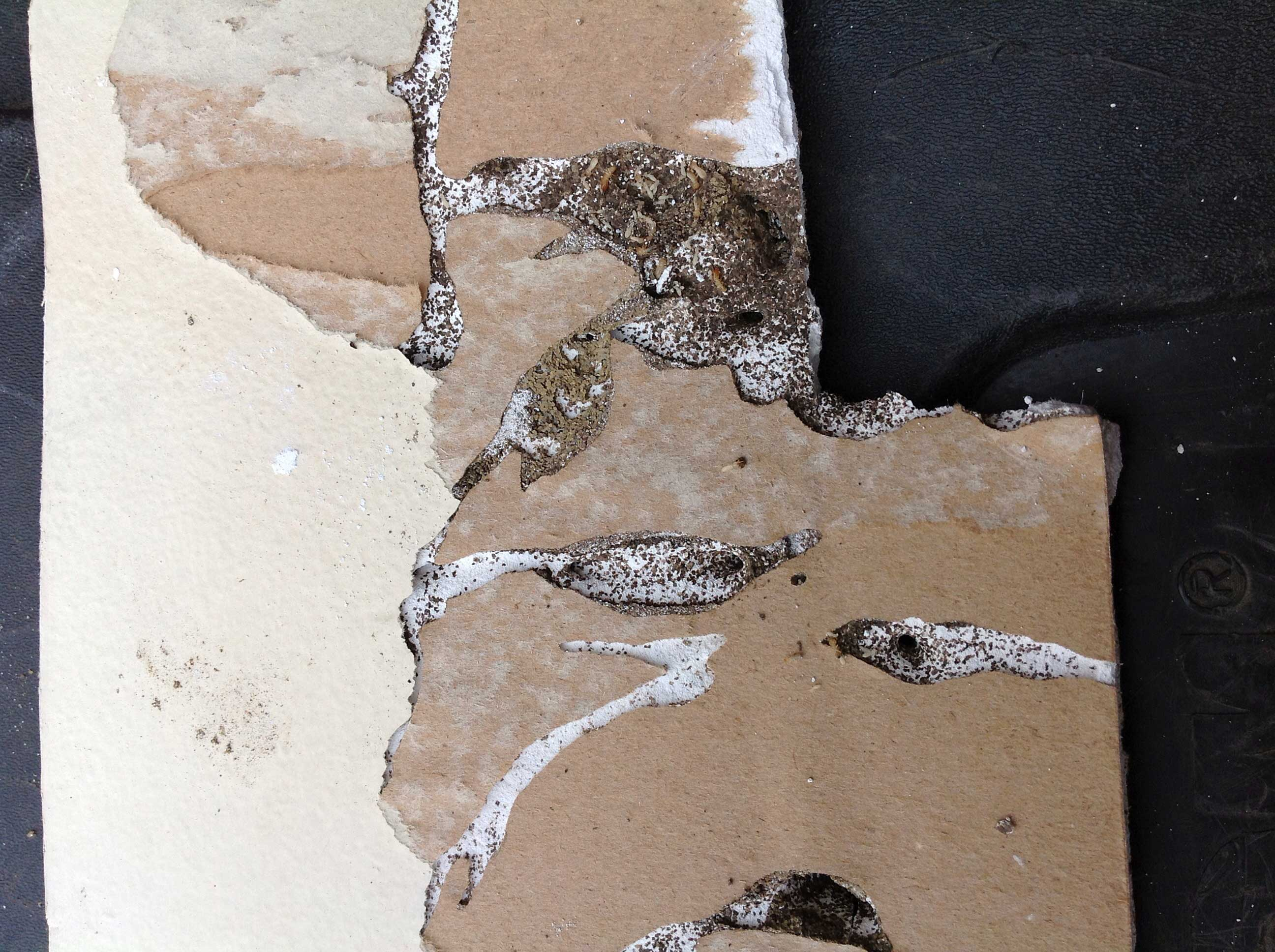 termite damage drywall