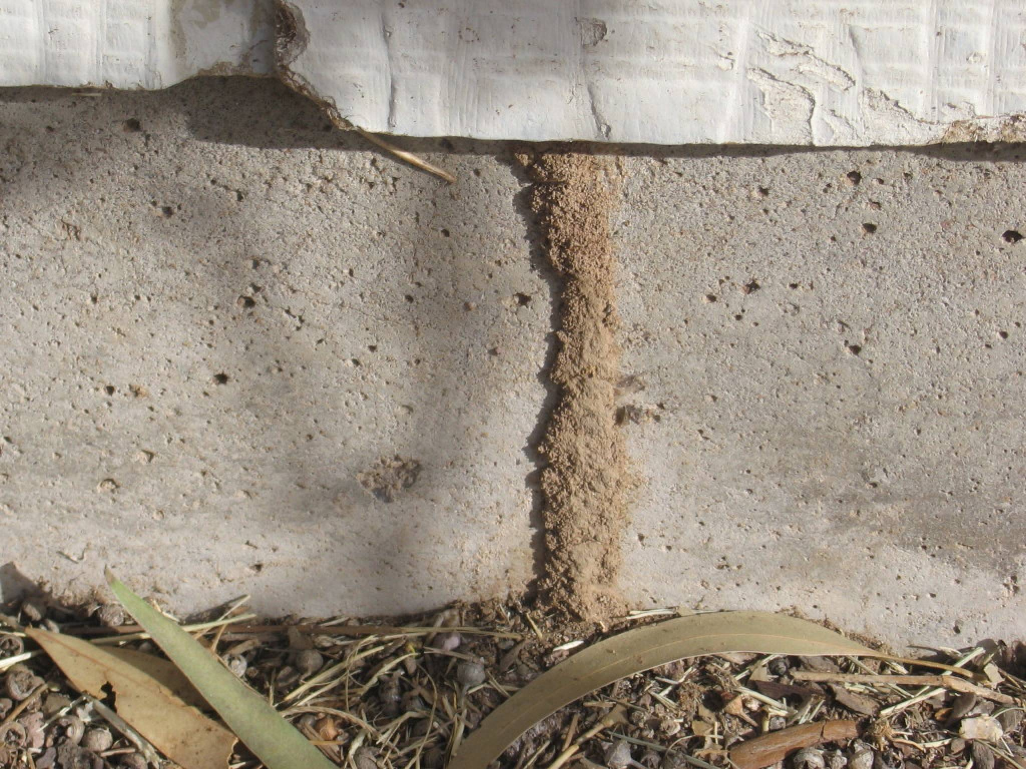 termite damage identification