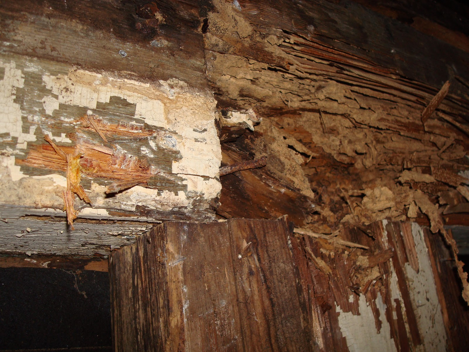 termite damage in walls