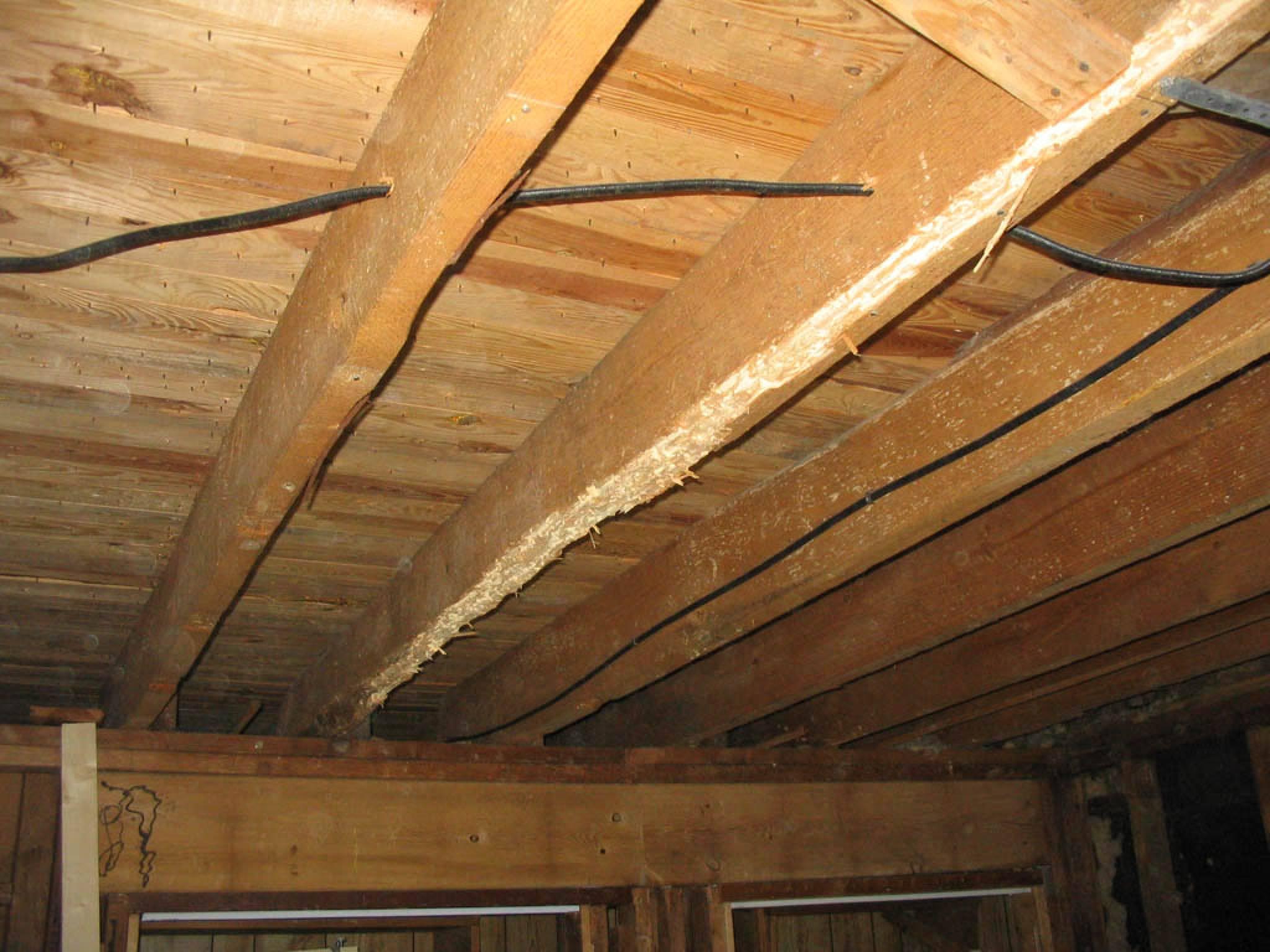 termite damage repair joists