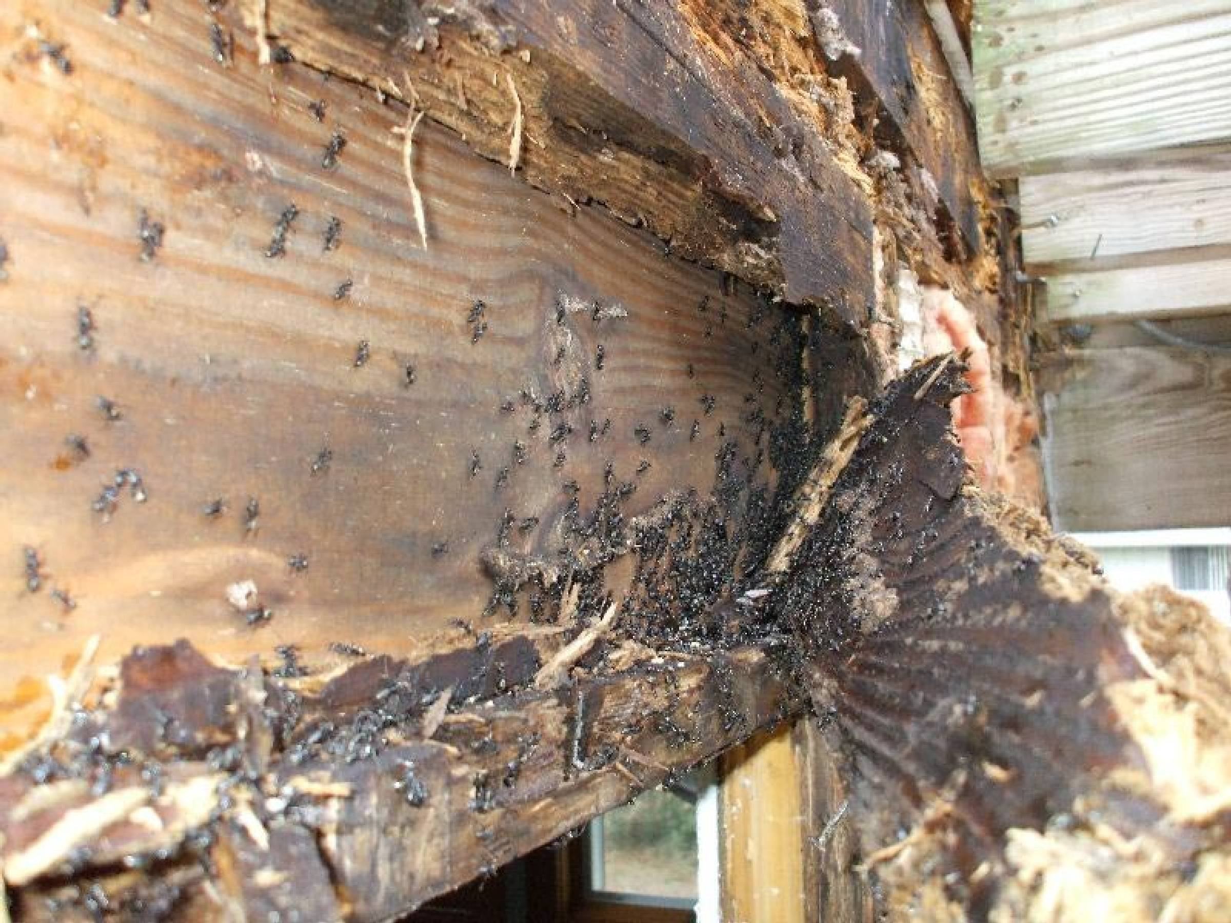 termite damage repair options