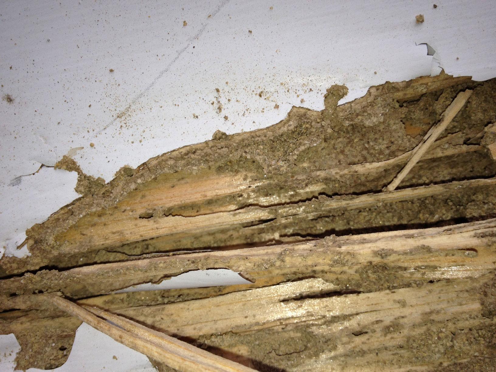 termite damage vs water damage
