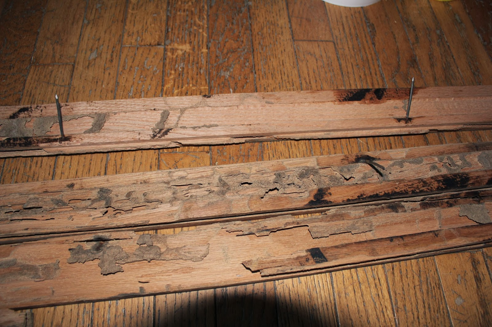 termite damage wood floors