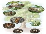 Cicada Life Cycle Photos
