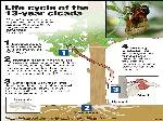 Cicada Life Cycle Pictures