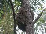 How To Get Rid Of Termites On Tree
