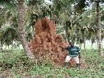Subterranean Termites South Africa