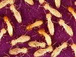 Termite Damage Photos